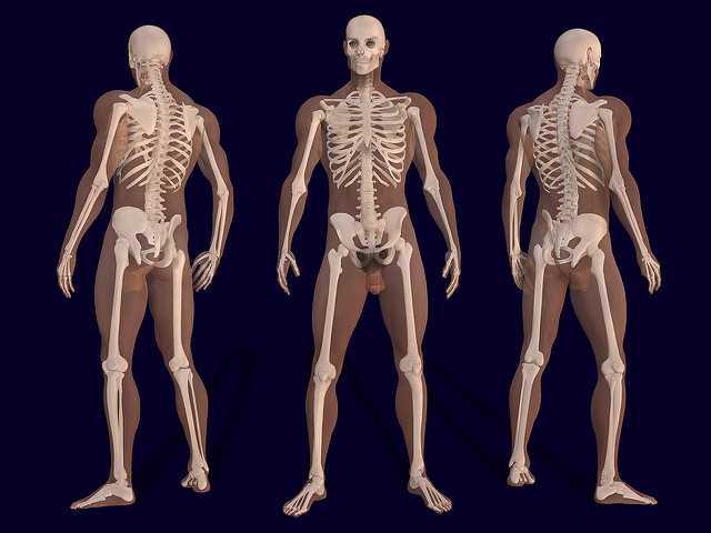 The Human Body Quiz Round 2