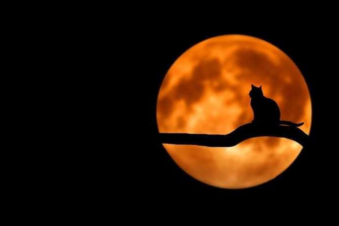 Spooky Halloween Quiz (Round 3)
