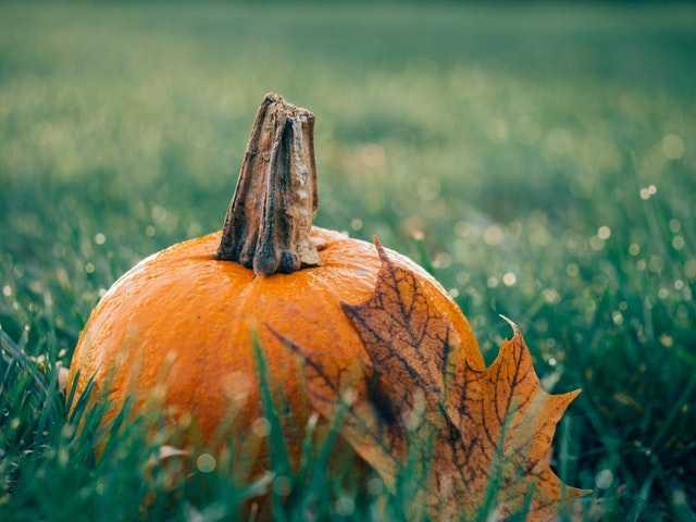 Halloween Film Quiz (Round 2)
